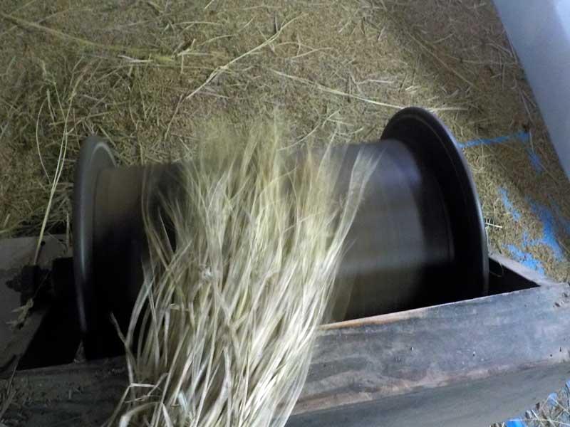 古代米の脱穀